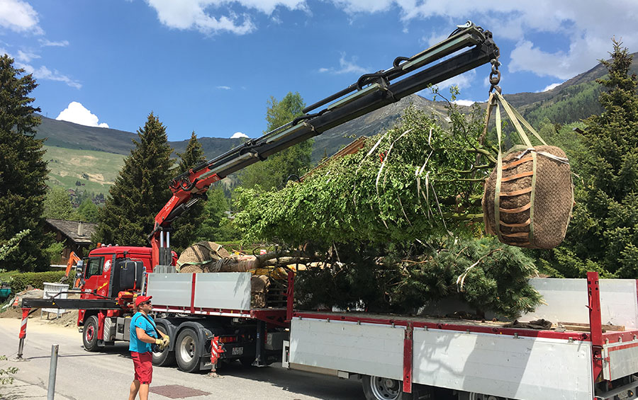 Michellod-paysage-planting-tree-verbier
