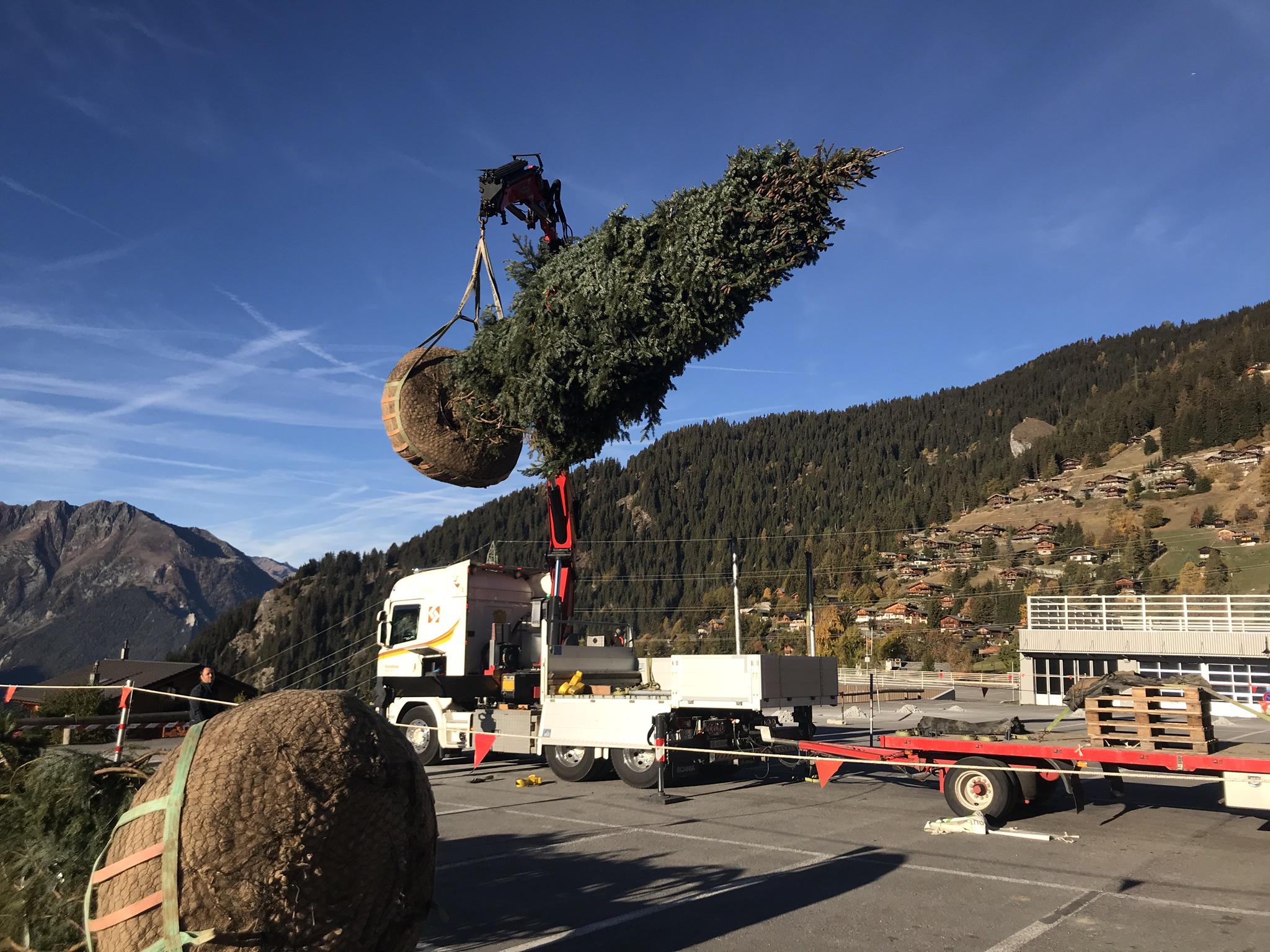 Order-large-tree-verbier-bagnes
