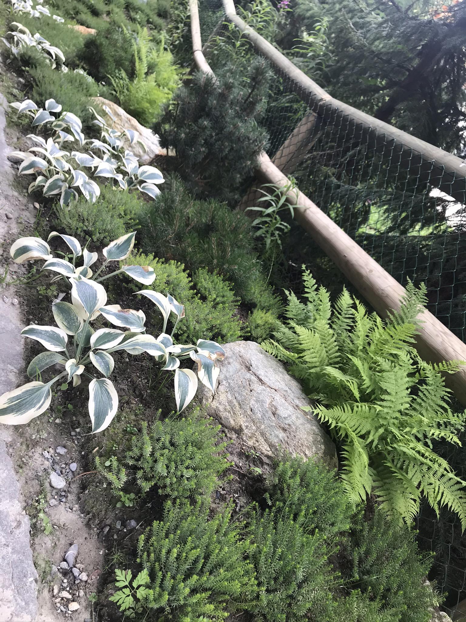 Plantation-ombre-verbier-shadow-plants