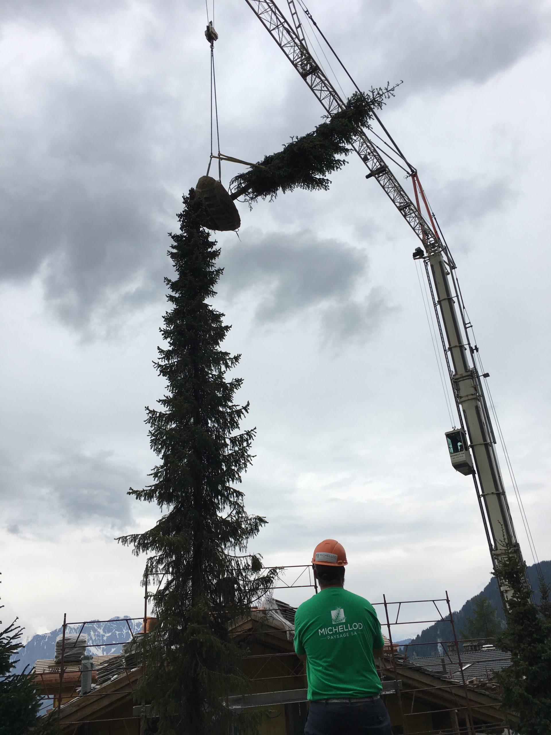 Planting-large-trees-verbier